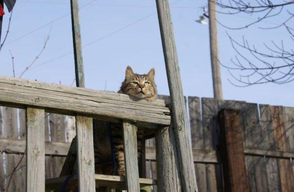 1 марта день кошек