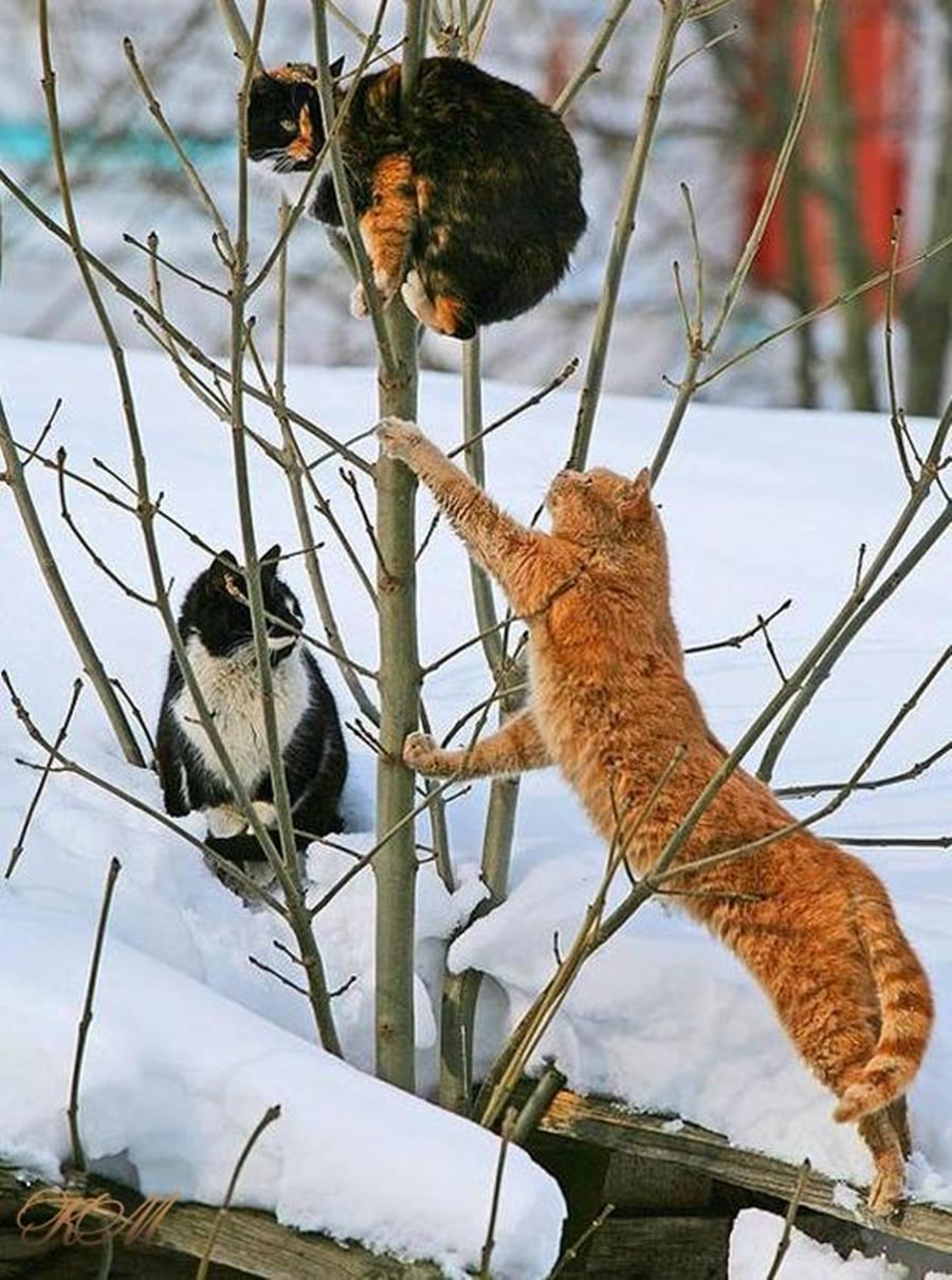 1 марта день кошек в России