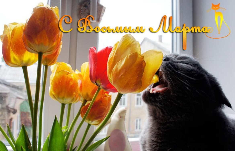 Кот 8 марта: сюрпризы от лучшего друга