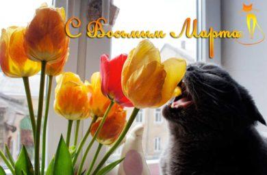 Открытка на 8 марта от кошки