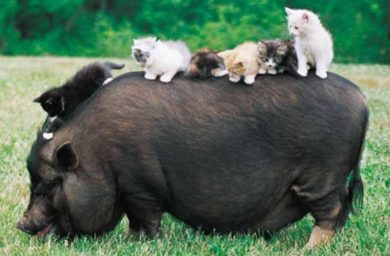 Acana pork butternut squash: отзывы