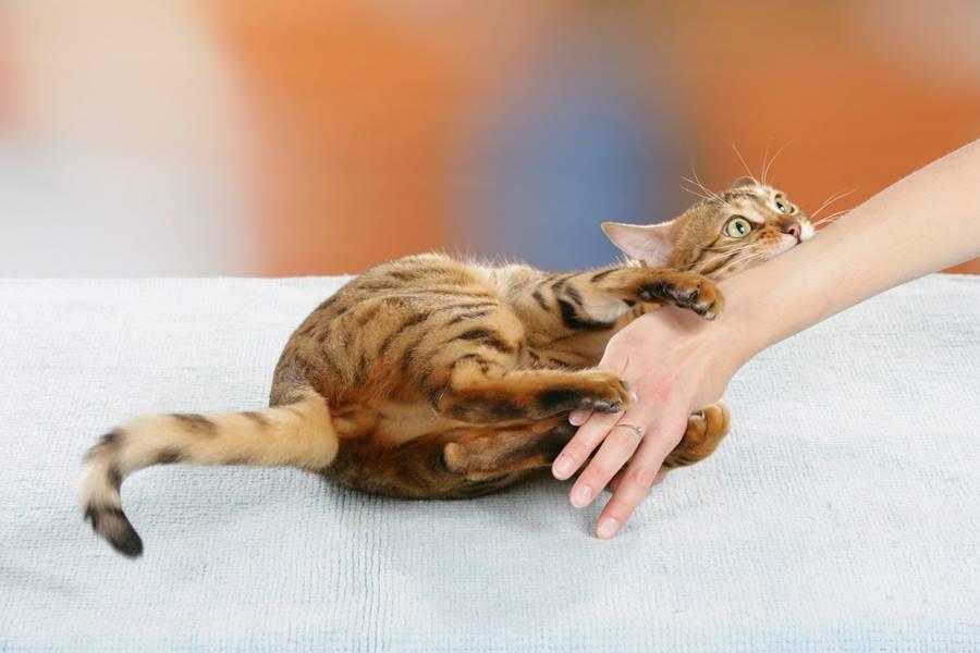 Агрессивное поведение кошки