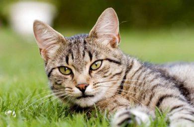 Анорексия у кошек: лечение