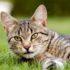 Лечение анорексии у кошек