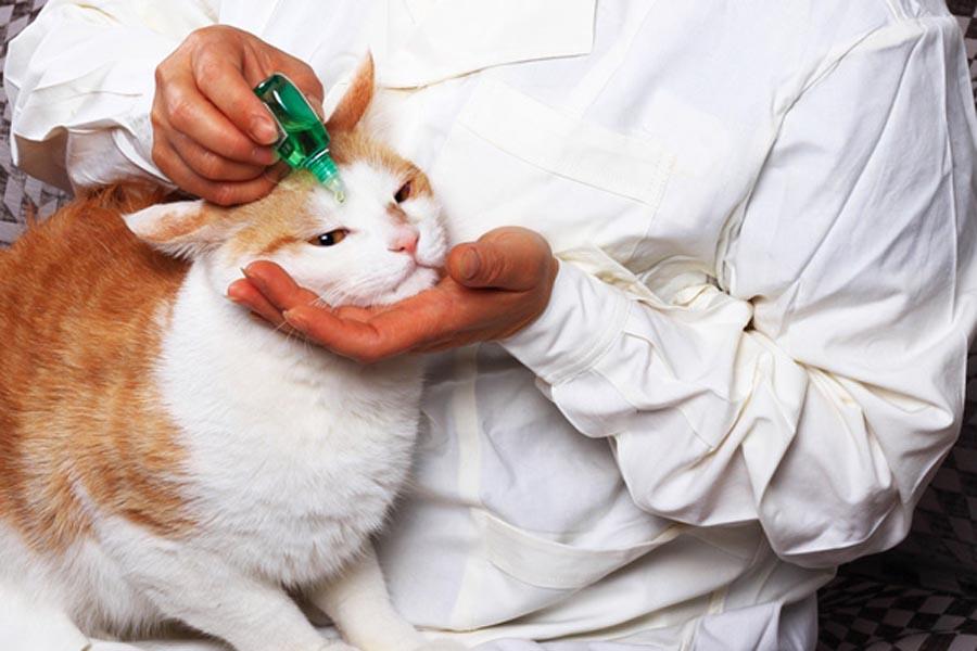 Антибиотики для кошек при гнойной инфекции глаз