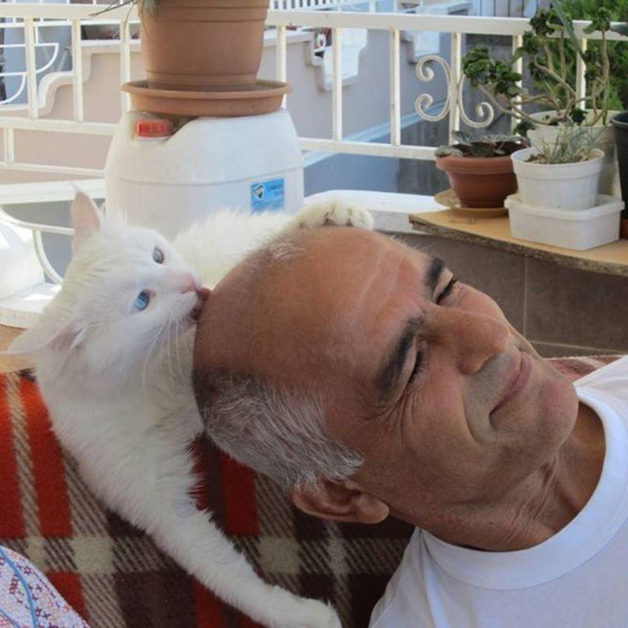 Фото белой кошки с разными глазами