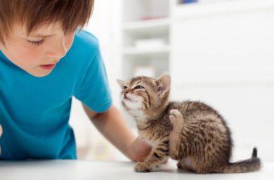 Опасны ли для человека кошачьи блохи