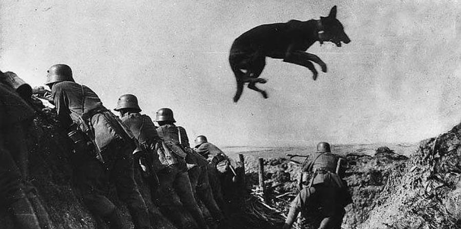 Бой пограничников с собаками против фашистов