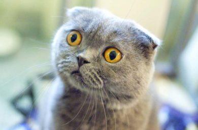 Болит ли у кошек голова