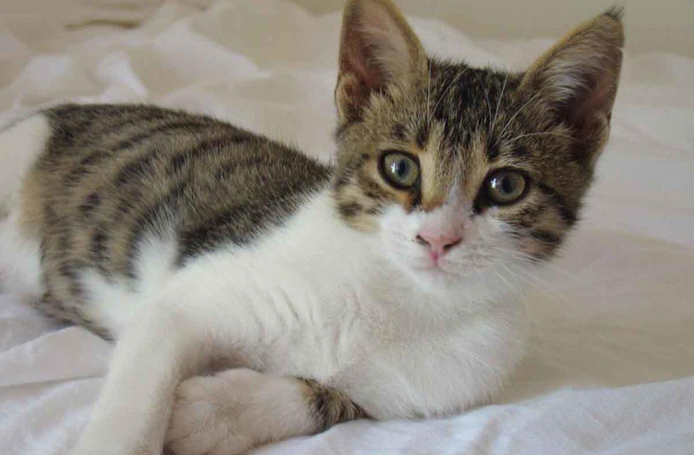 Бразильская кошка: фото киски из соседнего двора