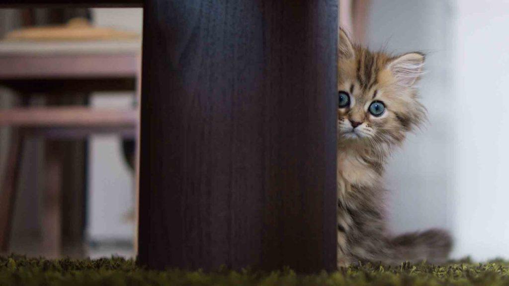 Что больше всего боятся коты