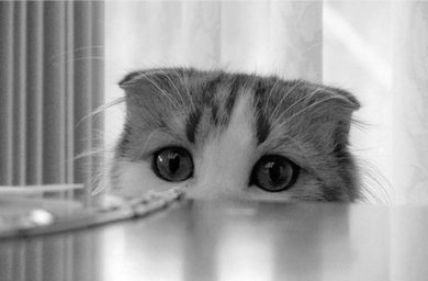 Чего боятся кошки и коты больше всего