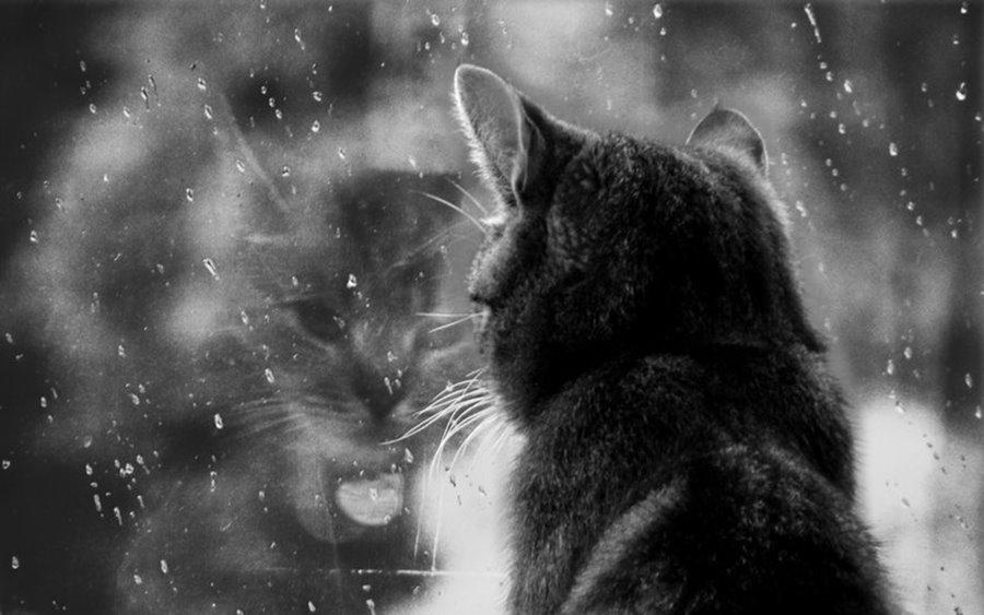 Чего не любят кошки и коты