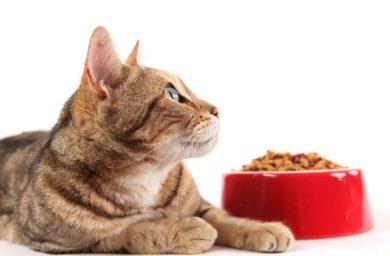 Чем кормить кота при гастрите