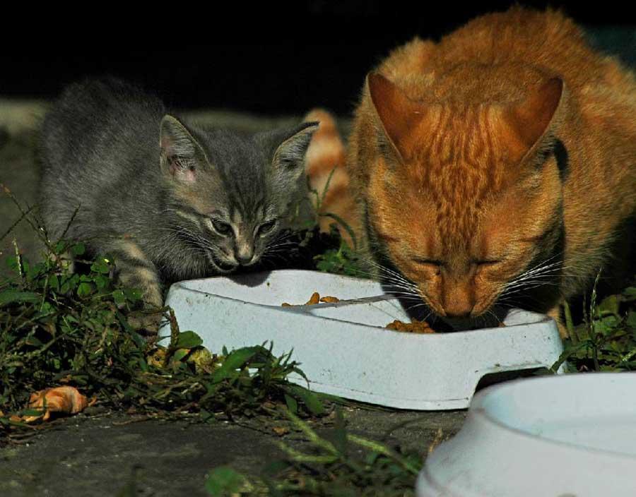 Чем откормить худого кота