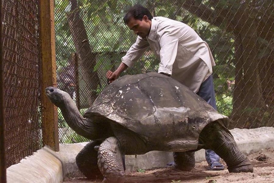 Черепаха-долгожитель
