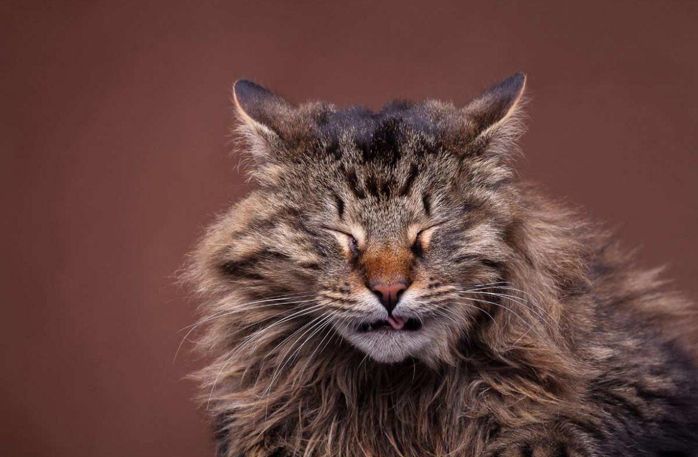 Что делать, если кошка часто чихает?