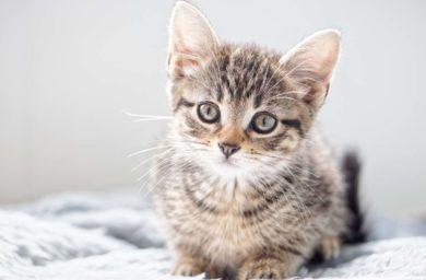 Что делать если у кошки сопли и она чихет
