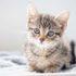 Что делать, когда кот чихает и у него сопли?