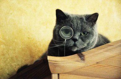 Что думают кошки о людях