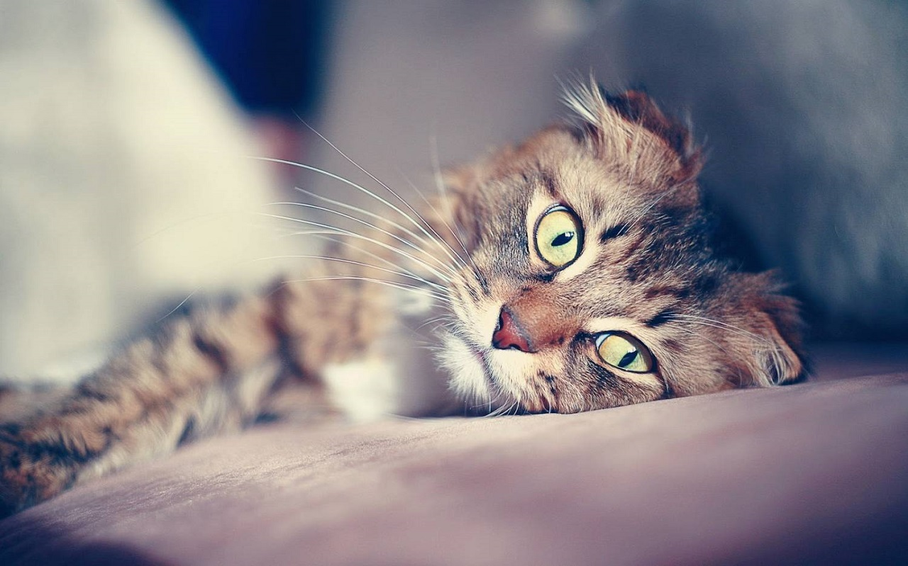 Что необходимо провести перед вакцинацией кошки