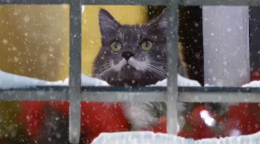 Что подарить кошке на новый год