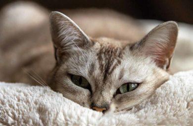 Что скрывают кошки