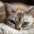 Что скрывают кошки?