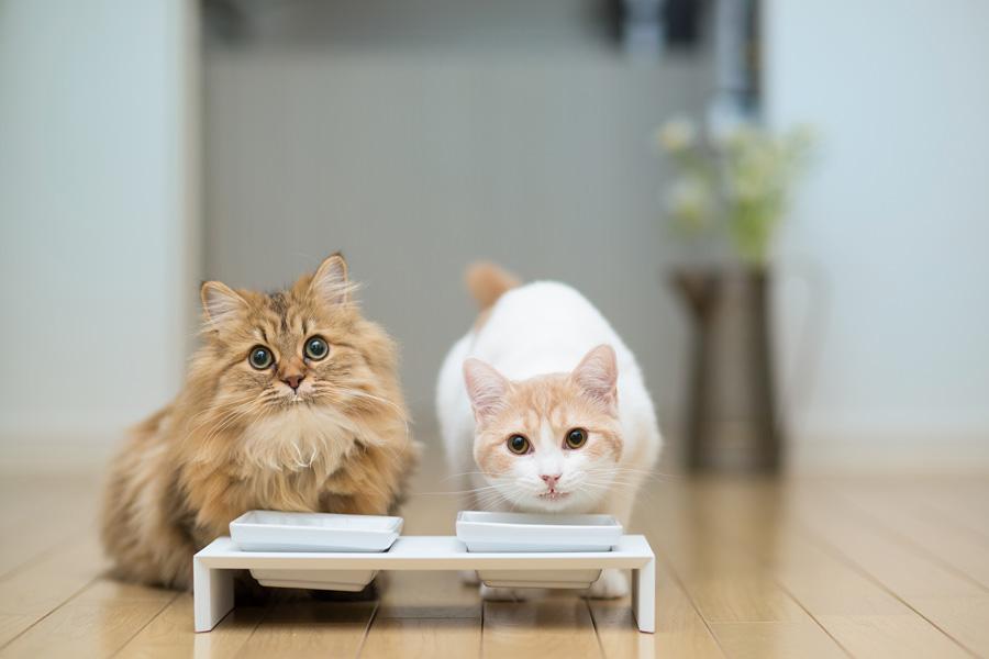 Чувствуют ли кошки вкус