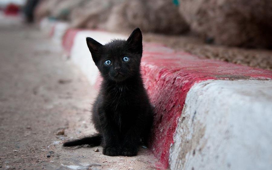 Черный котенок в литературе