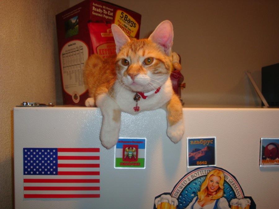 День кошек в Америке