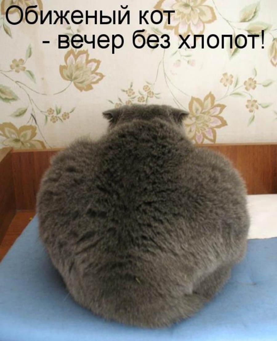 День кошек в России
