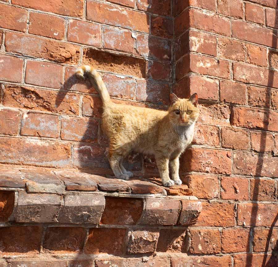 День котов и кошек в России