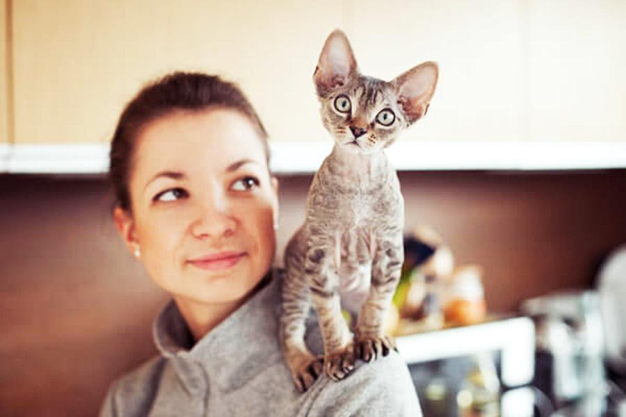 аллергия на кошек в виде сыпи