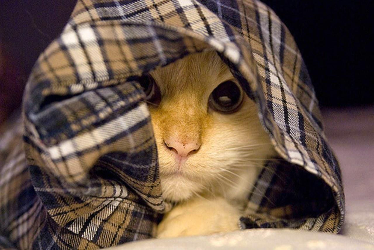 Симптомы дисбактериоз у кошек
