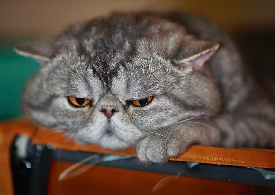 фото обиженных котов
