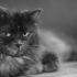 Как долго помнят кошки обиду