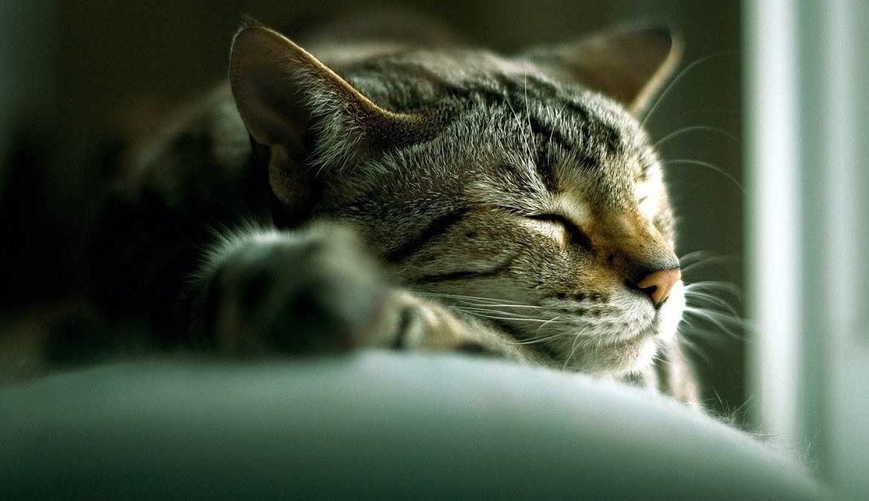 Долголетие кошек: в чём секрет?