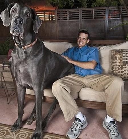 Долголетие кошек и собак