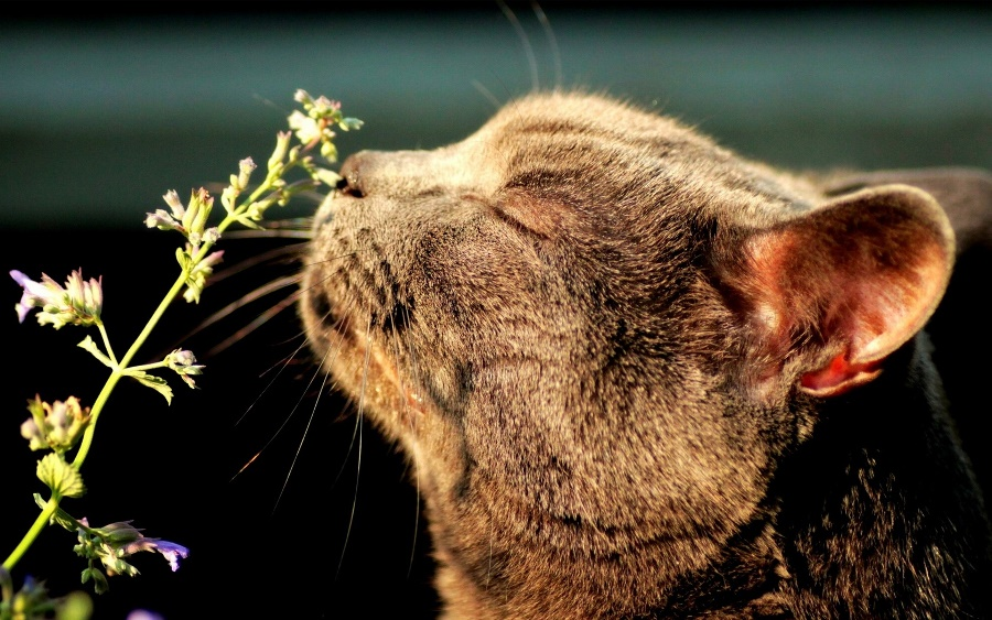 Домашний кот на даче