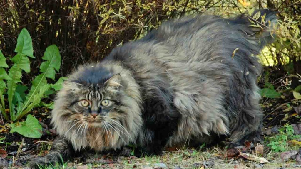 Кот который похож на рысь фото