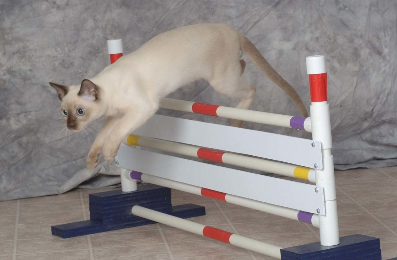 Девочка-тренер и её дрессированный кот: видео
