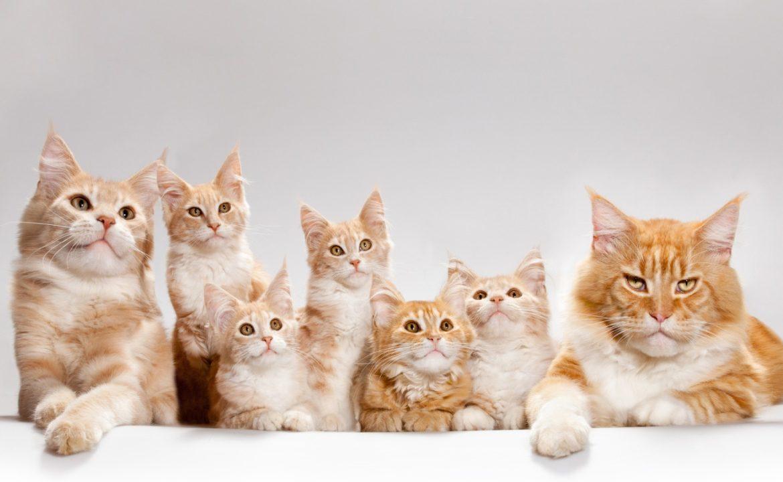 Древесный наполнитель лотка: от свалки до кошачьего туалета