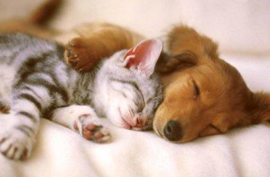 Дружелюбные породы кошек