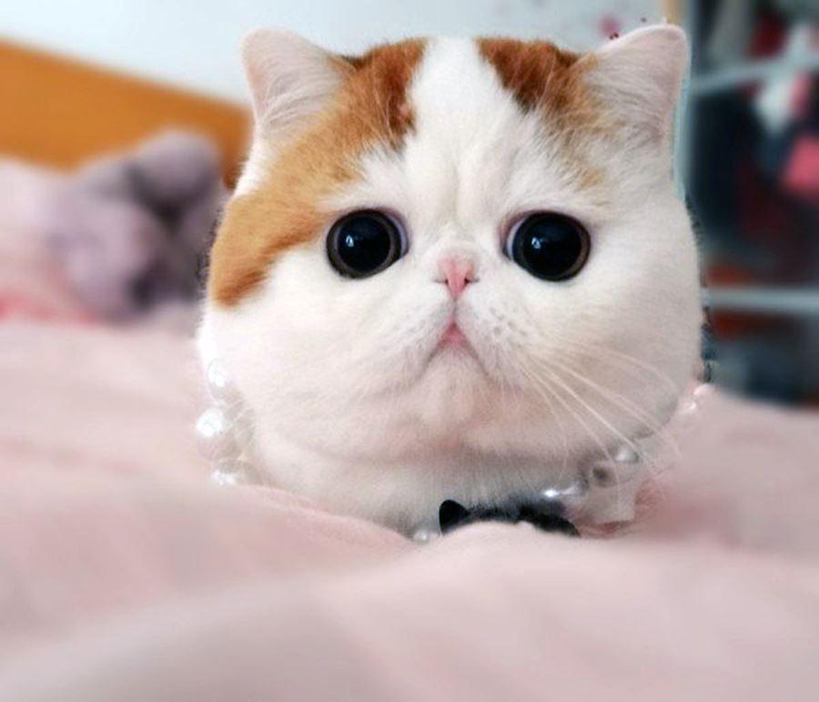 Самое милое кота в мире