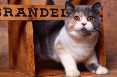 Экзотические имена для кошек