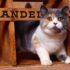 Экзотические имена для кошек: назову тебя Звёздочкой…