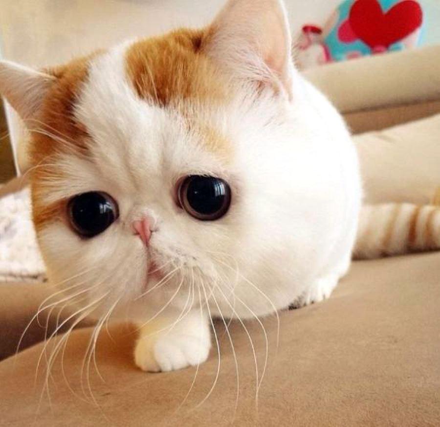 картинки котиков милых и няшных и мультяшных