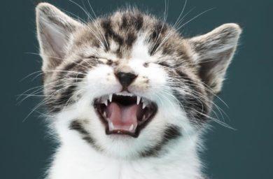 Если кот чихает, что надо делать