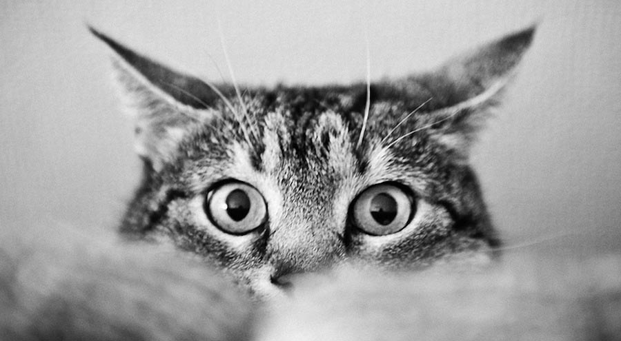 Есть ли память у кошек